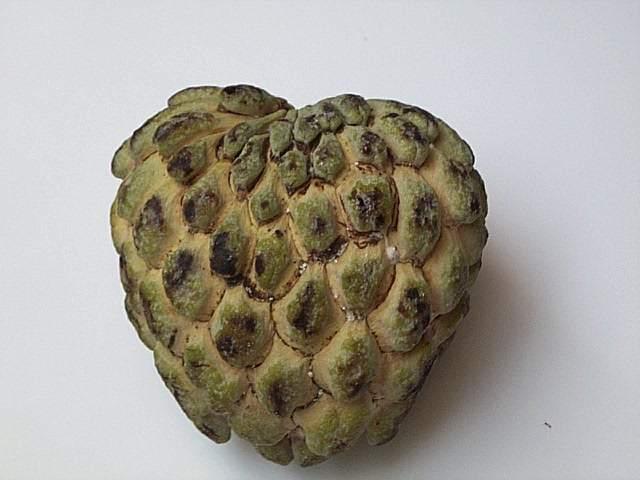 Corossol Fruit