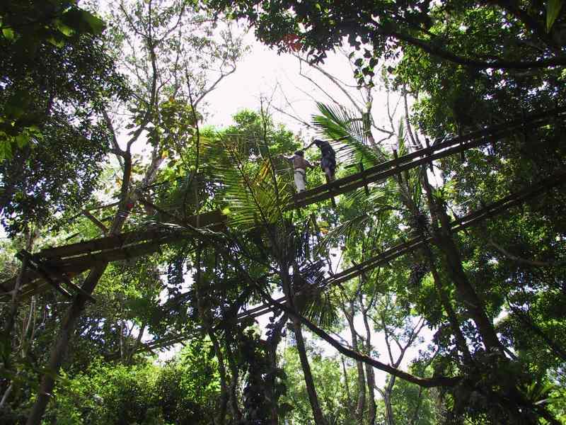 Visite de la canopée au parc des mamelles